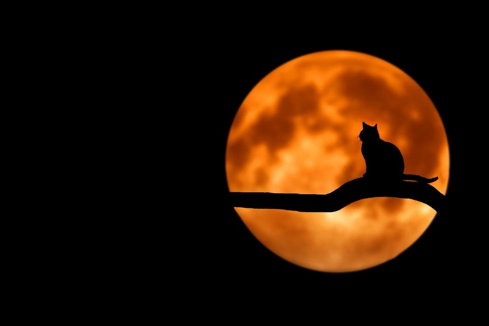 Conseils pour un halloween en toute sécurité