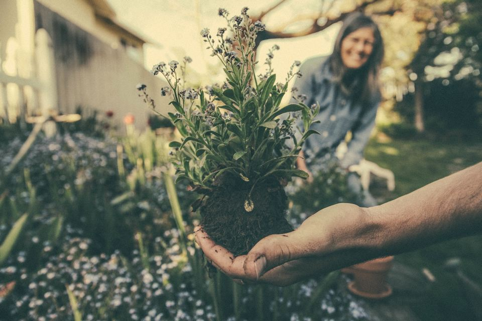 L'engrais et le compost présentent-ils un danger pour la personne allergique?